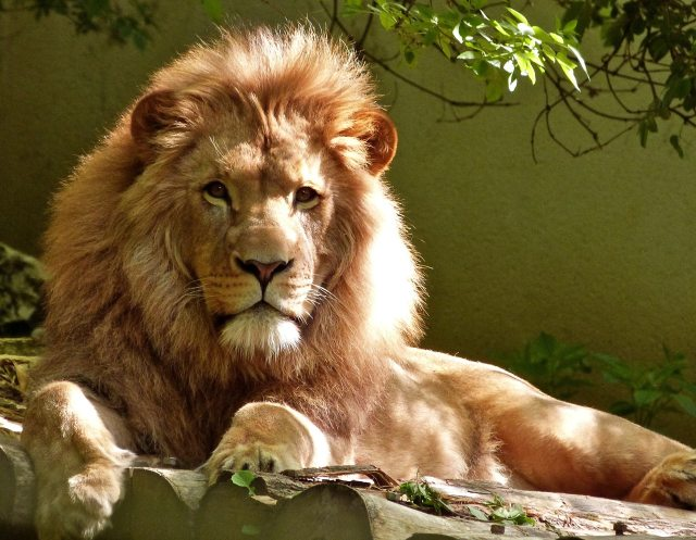 Blog - God Knows Our Name Lion.jpg